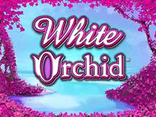 Играйте на клубе Вулкан во Белая Орхидея